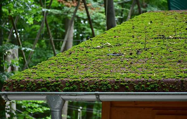Old roof that has plants